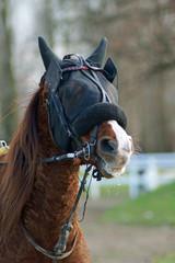 portrait d'un cheval de course
