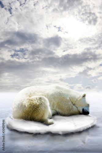 In de dag Ijsbeer Eisbär-Eisscholle
