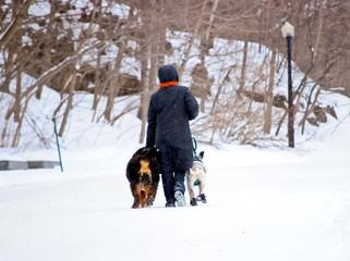 Promenade avec ses chiens