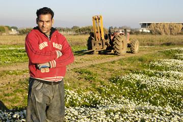 Immigrato al lavoro nei campi