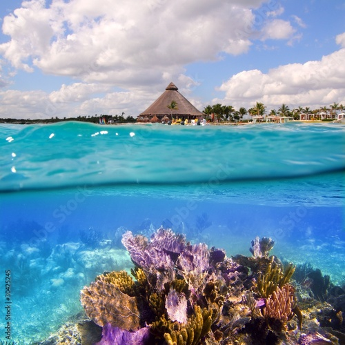 Papiers peints Recifs coralliens Coral reef in Mayan Riviera Cancun Mexico