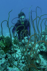 corallo a fruste