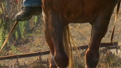 Cavallo che traina - Pan verso il basso - Slow-motion