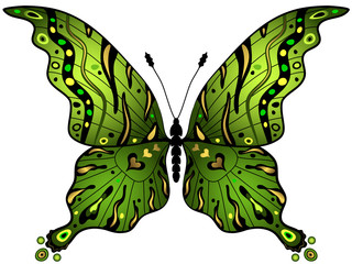 Green-gold butterfly