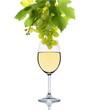 Weißwein mit Weintrauben
