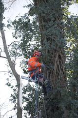 homme grimpeur élaguant un arbre