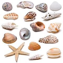 Colección de conchas marinas.