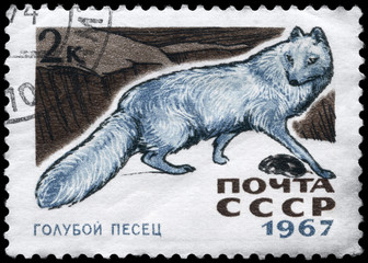 USSR - CIRCA 1967 Blue Fox