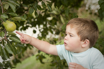 cute little boy picking fruit from tree