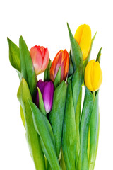A bouquet of colorful tulips isolated on white background.