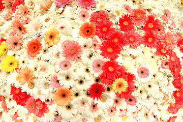 Multicolor background made of different flowers .