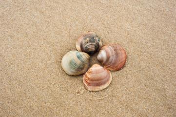 Detail von Muscheln am Strand