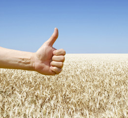 hand show ok over wheat field