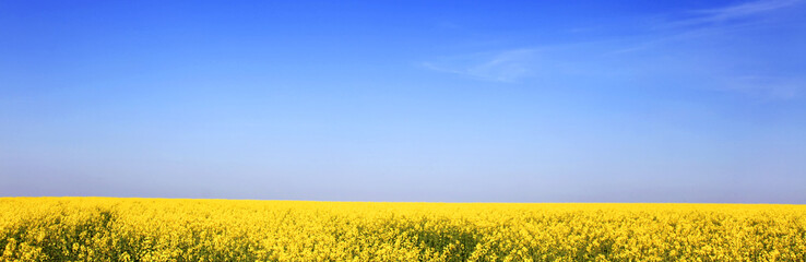 Colorful rape field. Ukraine. East Europe.