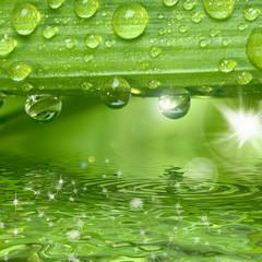 Wassertropfen auf grüner Pflanze mit Sonne und Glitzern