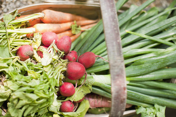 Close up of fresh vegetables in basket