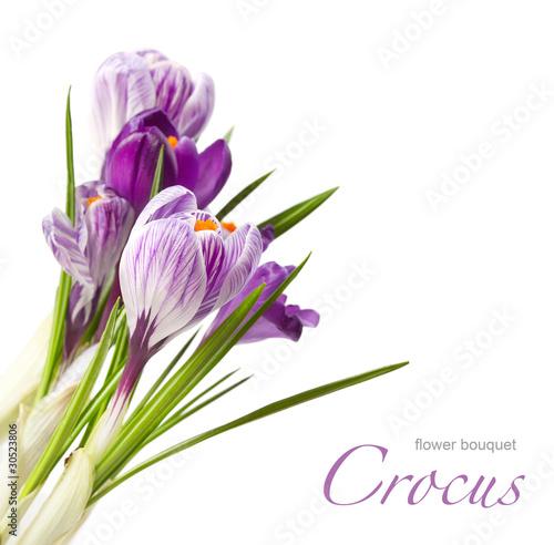 Foto op Aluminium Krokussen card with spring flower