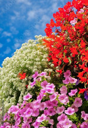 balkonpflanzen beliebte sommerblumen von mahey. Black Bedroom Furniture Sets. Home Design Ideas