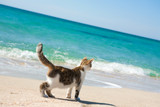Fototapety Cat on the beach