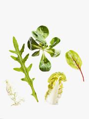 Variety of green leaf lettuce