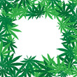 Marijuana leaves frame