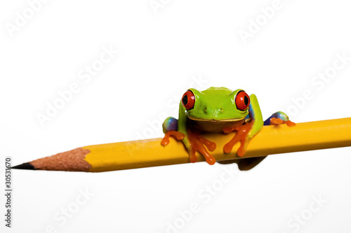 Poster Kikker Red Eye Tree Frog on a Pencil