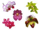 some uncommon isolated orchid flowers