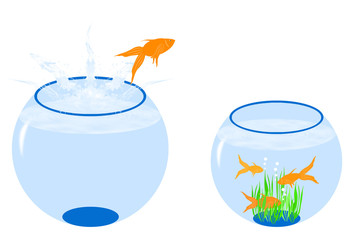 Bocce con pesci e alghe