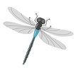Vector insect - dragonfly