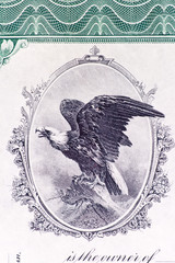 Bald Eagle Engraving Old U.S. Stock Certificate