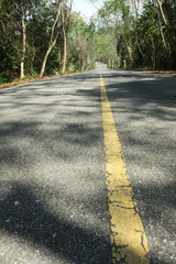 The long road, The yellow line on the road to the forest.