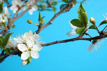 primavera - rami fioriti