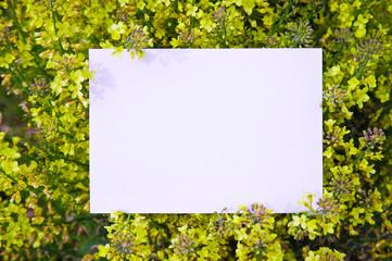 paper_plant_091