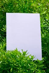 paper_plant_125