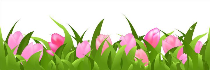 Tulips Panorama