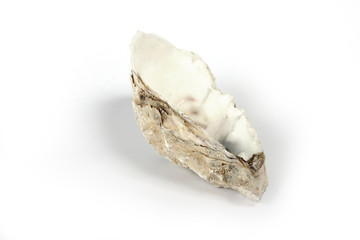 Oyster shell, isolated on white