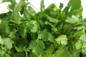 coriander close up with white background