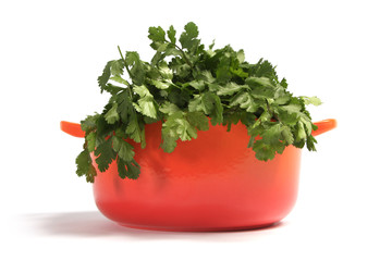 cast iron cooking pot, isolated on white with coriander