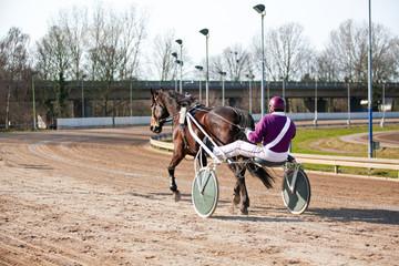 harness racing. horse