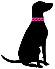 Hund Flohhalsband