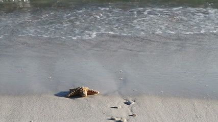 Starfish In Surf