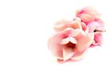decoration of magnolia