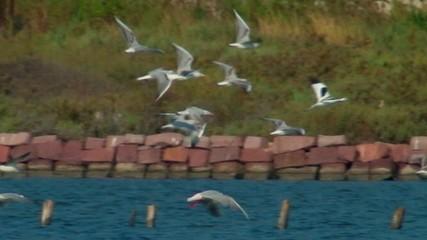 Gabbiani in volo - Sardegna - Slow-motion