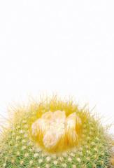 Cactus aislado.