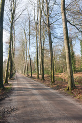 Dutch countryroad in springtime