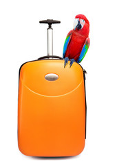 The colourful parrot sits on a suitcase for travel..