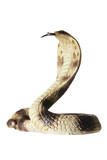 Rubber Cobra poster