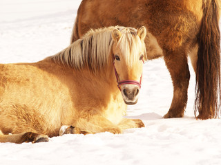 Pferd 27