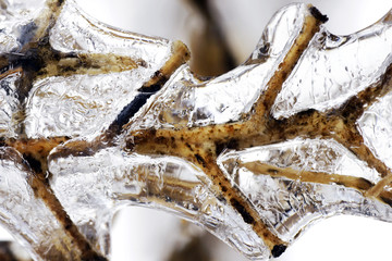 Twig in ice