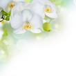 Fototapeten,orchid,weiß,orchid,blume